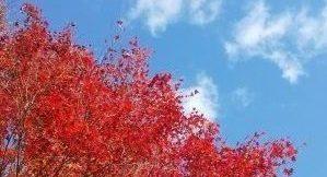 21世紀の森で鮮やかな紅葉と森林浴を満喫